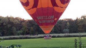 Luchtballon landt in een weiland, bijna tussen de waterbuffels
