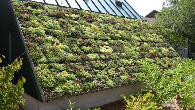 Zes nieuwe partijen ondertekenen Green Deal Groene Daken tijdens de Dutch Design Week