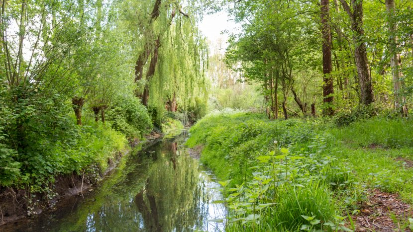 Natuur en bossen in Son en Breugel