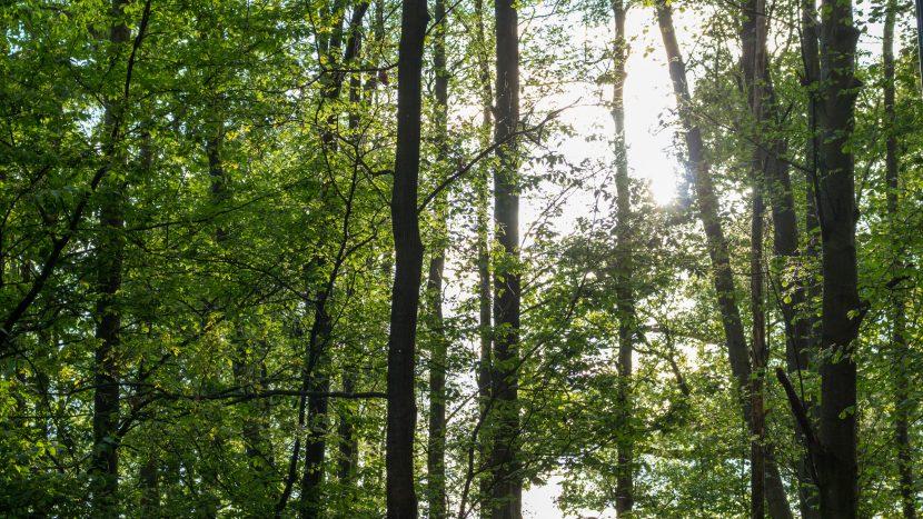 Bomen in de bossen van Son en Breugel