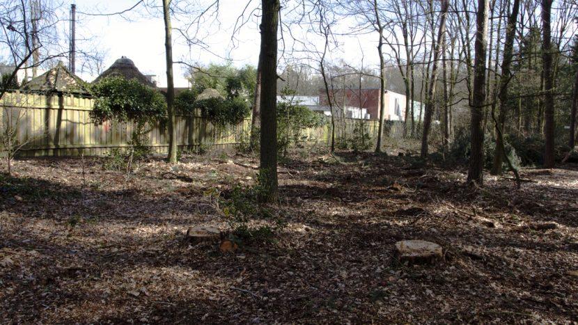 Het Sonse Bos wordt kaler en kaler na nieuwe bomenkap