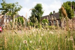 Ecologisch bermbeheer: minder maaien om insecten de ruimte te geven