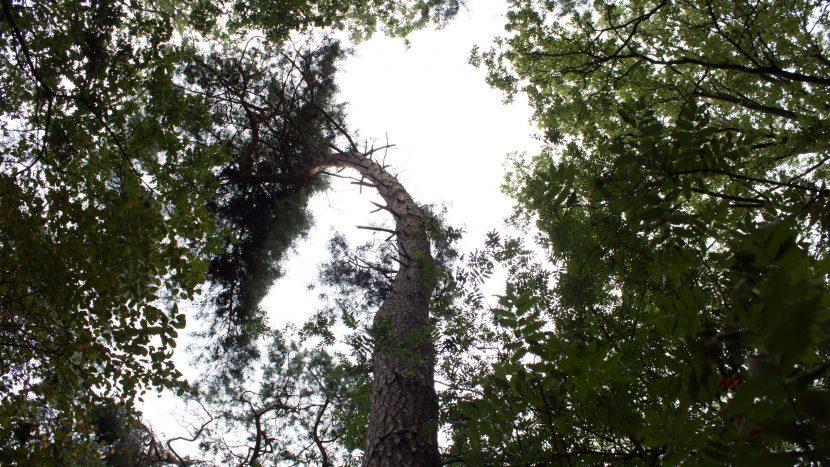 Bomen in de bossen van Sonse Bergen