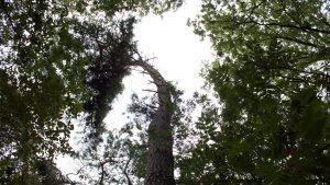 Lijk in de bossen blijkt slapende dakloze man