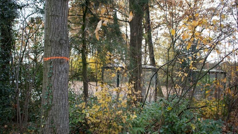 Bomen die aangeduid zijn voor kap of behoud