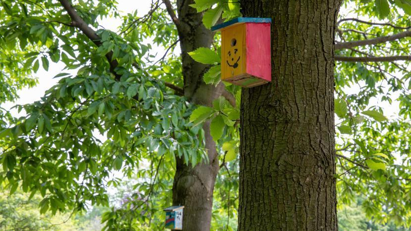 Wezenkastjes of nestkastjes tegen bomen om eikenprocessierups te bestrijden