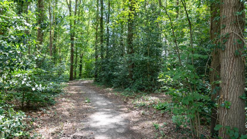 Een pad in een bos in Son
