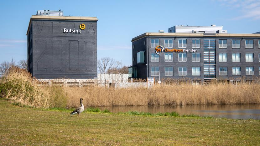 Gans langs de oever van een waterbank op Ekkersrijt met twee kantoorgebouwen