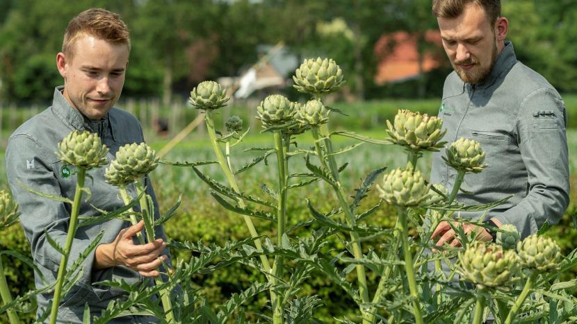Thijs Valckx en Jonathan Franken van Local Food in een veld met artisjoken