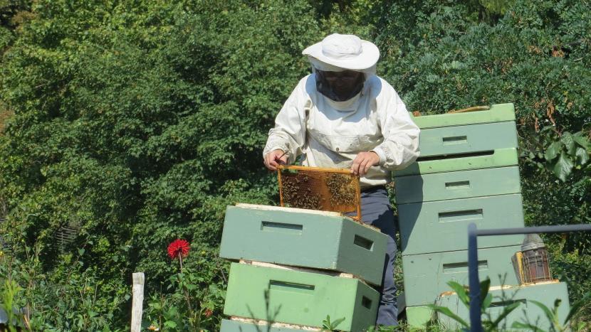 Een imker bij zijn bijen