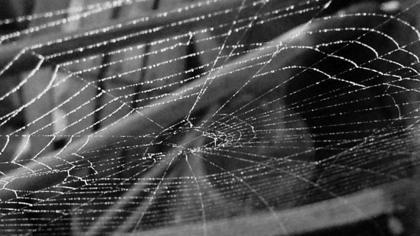 CMD steeds meer de 'spin in het web'
