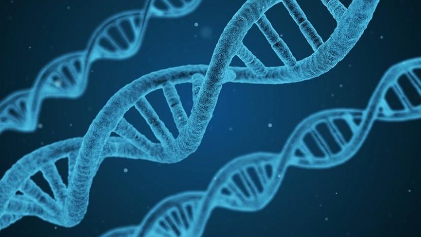 DNA verraadt verdachte van twee inbraken in Son en Breugel