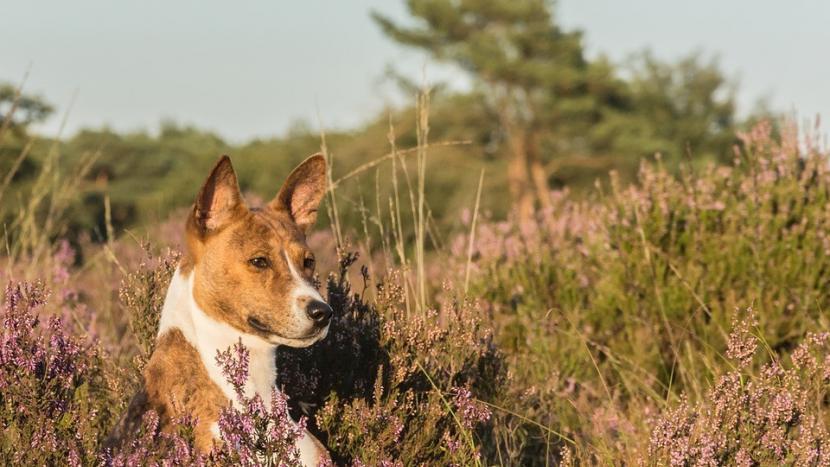 Meer locaties in het buitengebied aangewezen waar honden los mogen lopen