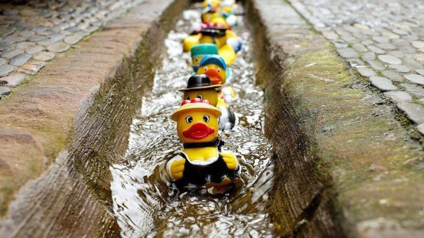 De Lucky Duck Race komt op Koningsdag terug